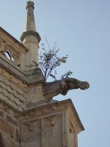 Fotógrafo @ Catedral de San Antolin en Palencia, España