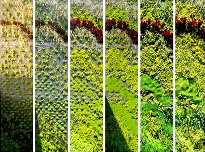 Muro vivo alania arquitectura for Diseno de muros verdes